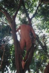 Snapseed(50)